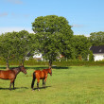 Horses — Stock Photo #30220489