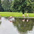 Dortmund park — Stock Photo #30227737