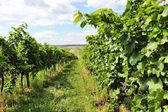 Burgenland — Stock Photo