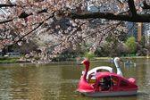 Ueno Park, Tokyo — Stock Photo
