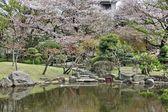 Tokyo park — Stockfoto