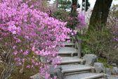 Jardín en japón — Foto de Stock