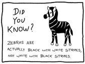 Fun fact — Stock Vector