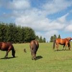 Horse farm in Poland — Stock Photo #45589021