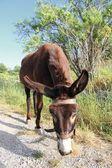 Donkey in Crete — Stock Photo