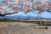 Japan - Arashiyama — Stock Photo