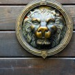 Copper lion sculpture on the door — Stock Photo