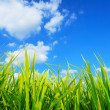 Green grass,environmental protection concept — Stock Photo