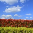 Red fresh leaves background in cloud skyline — Stock Photo