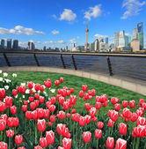 Red tulips prospects of Shanghai bund Lujiazui city landmark sky — Stock Photo
