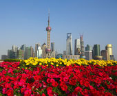 Red morning glory prospects Shanghai landmark city buildings sky — Stock Photo