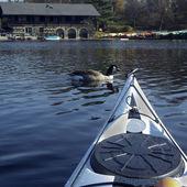 Kayak surfer meeting a duck — Stock Photo