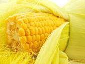 Uma orelha de macro de milho — Foto Stock
