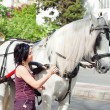 Carriage white horse and tourist  in Jeres,  Spain - Stok fotoğraf