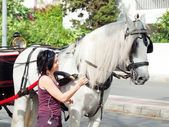 Carriage white horse and tourist in Jeres, Spain — Stock Photo