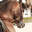 High school of equestrian  in  Spain — Stockfoto