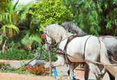 Beautiful horse-drawn in Andalusia, Spain — Stock Photo