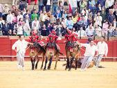 SEVILLA -MAY 20: Novilladas in Plaza de Toros de Sevilla. May 2 — Stock Photo