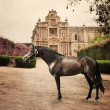 Andalusian horse front monastery emergence of breed . Andalusia, — Stock Photo