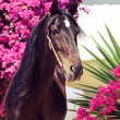 Foto Stock: Beautiful purebred Andalusistallion at flowers background. Sp