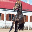 Stock Photo: Beautiful ahalteke stallion in motion