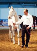 Saint-Petersburg, Russia. 3th May, 2013. breed akhalteke mare c — Stock Photo
