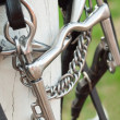 Details of curb bit bridle close up — Stock Photo #25435211