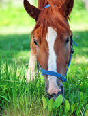 Portrait of young horse in the pasture. close up — Stockfoto