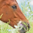 Portrait close up of colt in the pasture — Stock Photo