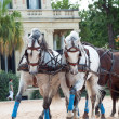 Beautiful breed carriage horses in Andalusia, Spain — Stock Photo #29496979