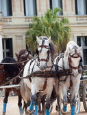 Beautiful breed horses in Andalusia, Spain — Stock Photo