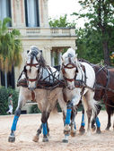 Beautiful breed carriage horses in Andalusia, Spain — Stock Photo