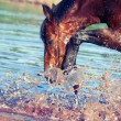 Portrait of splashing bay horse.focus on the drops — Stock Photo
