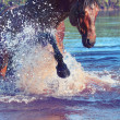 Splashing bay beautiful horse. — Stock Photo