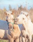 ポニーの子馬をグルーミングします。秋 — ストック写真
