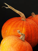 Pumpkins at the black background — Stock Photo