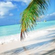 Stock Photo: Tropical beach in Dominicrepublic.