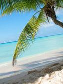 Tropical beach in Dominicana — Stock Photo