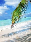 Tropical beach in Dominican republic. — Stock Photo