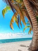 Tropical beach in Dominican republic. Saona — Stock Photo