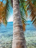 Tropical beach in Dominican republic. Caribbean sea — Stock Photo