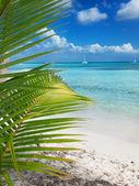 Tropical beach in Dominican republic. Caribbean sea. island Saon — Stock Photo