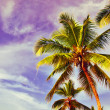 Coconuts palm tree at blue background — Stock Photo