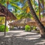 Tropical beach in Dominican republic. Caribbean sea. Saona islan — Stock Photo #40321519