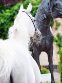 Portrait of white arabian stallion with statue of horse — Stock Photo