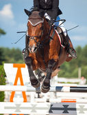 Jumping horse with rider — Stock Photo