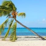 Palm tree on a wild beach — Stock Photo