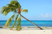 Palm tree on a wild beach — Stock Photo