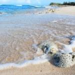 Cuban Wild beach — Stock Photo