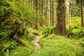 Hoh Rainforest — Stock Photo